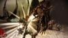Dragon Age: Origins, sloth_mage_fight_005_bmp_jpgcopy.jpg